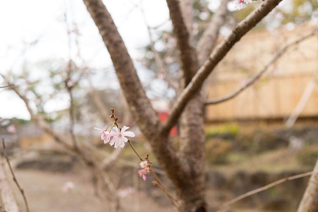 楽寿園(3)