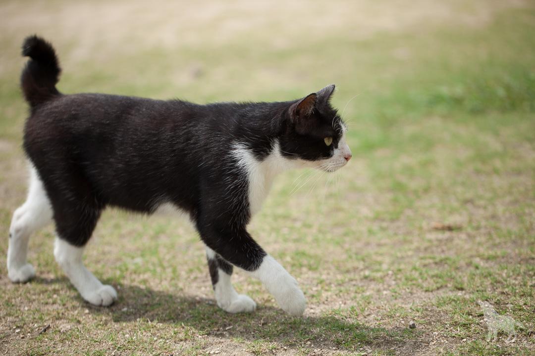 尾道の猫(2)