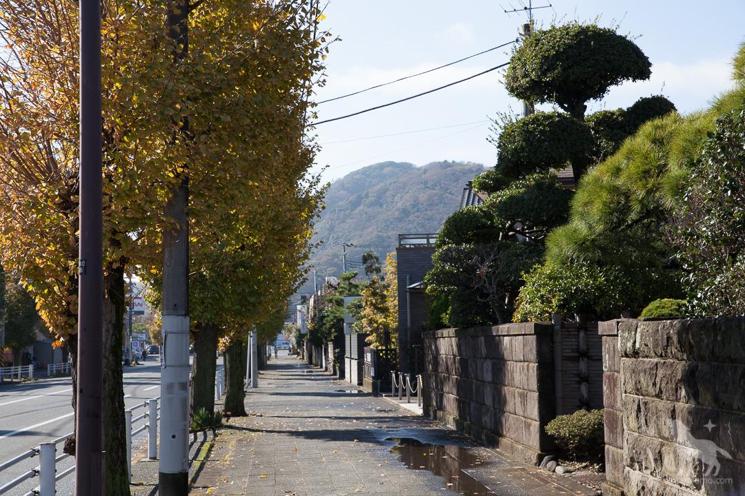 高麗山を眺める(1)