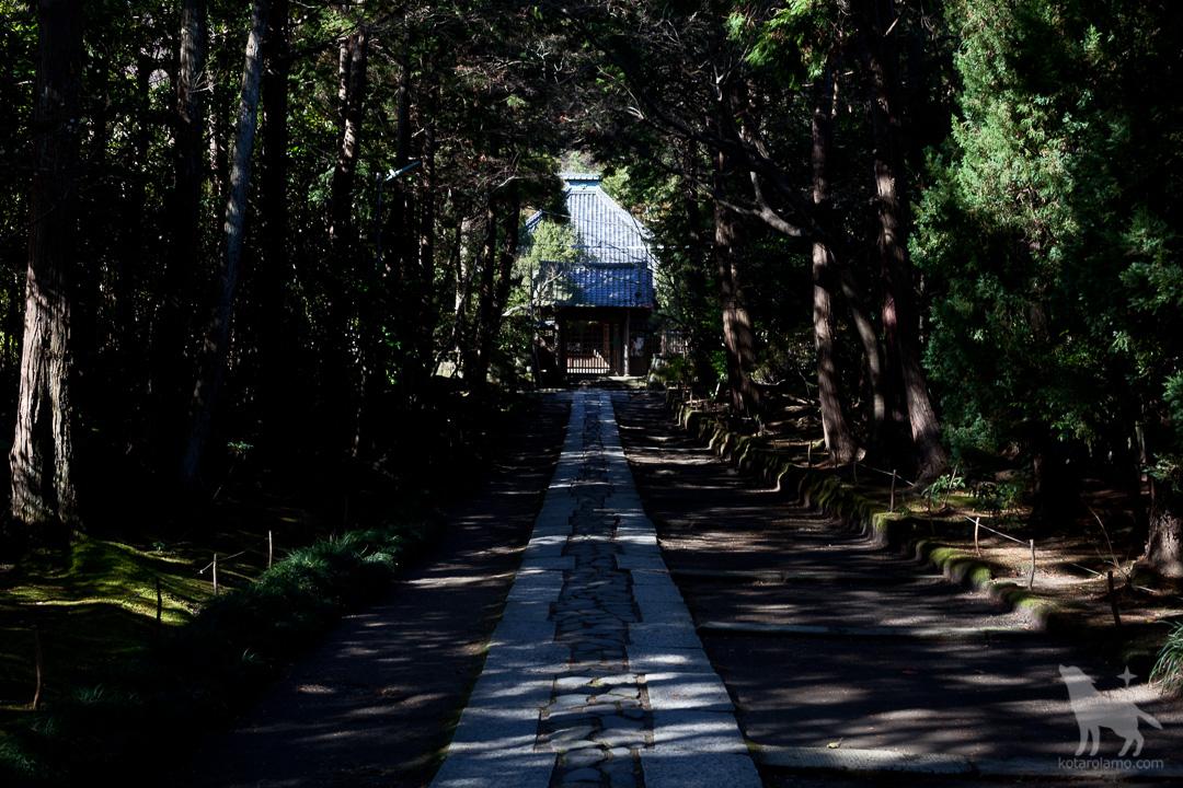 鎌倉の寿福寺(2)