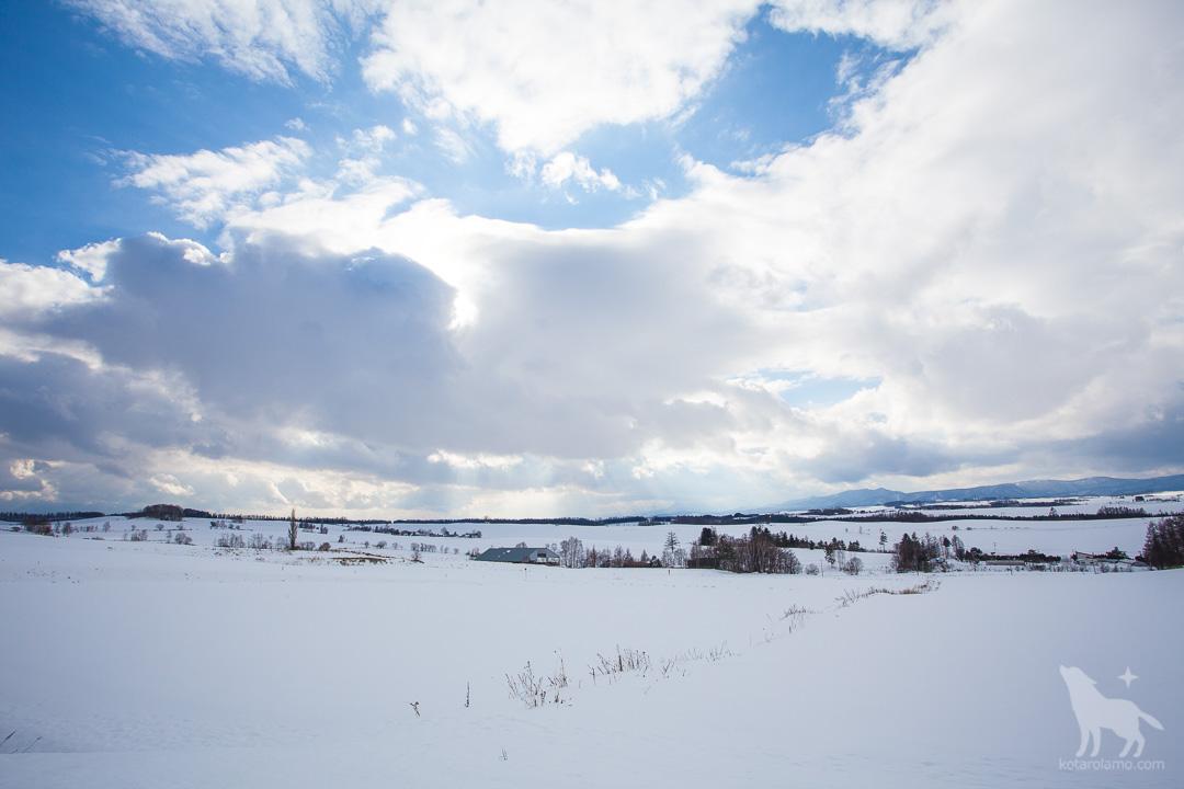 美瑛の雪原