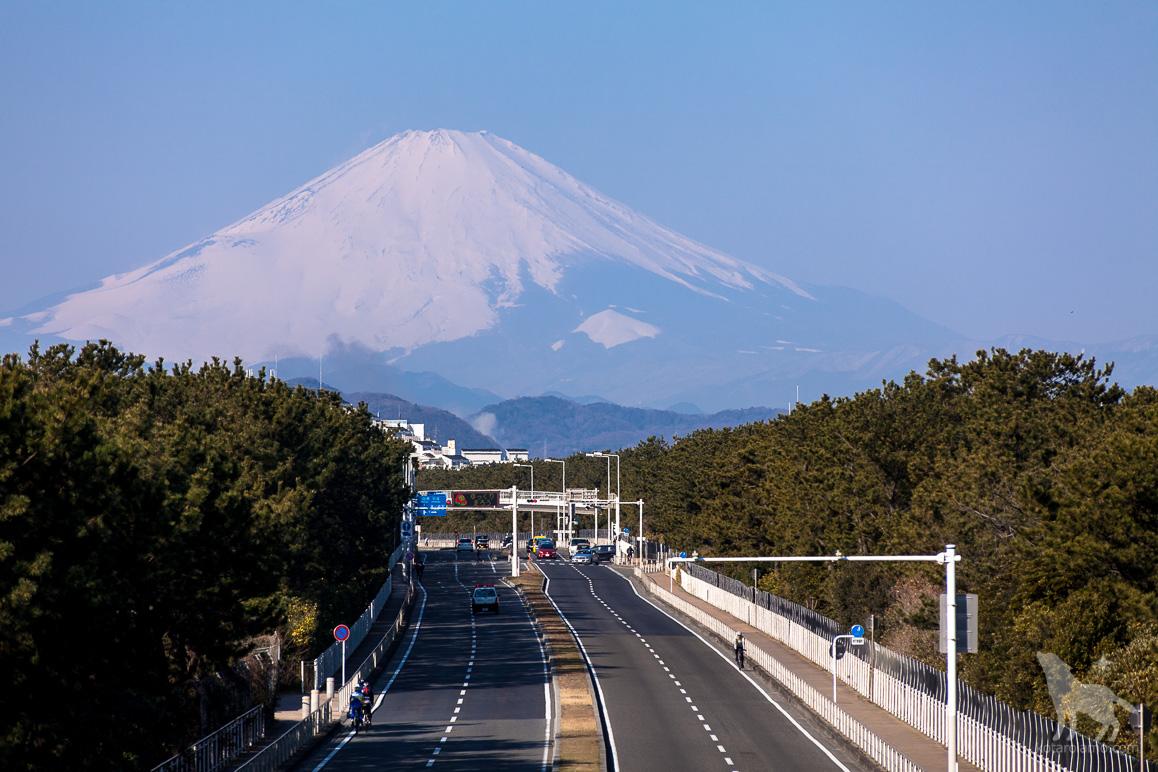 国道134号線と富士山