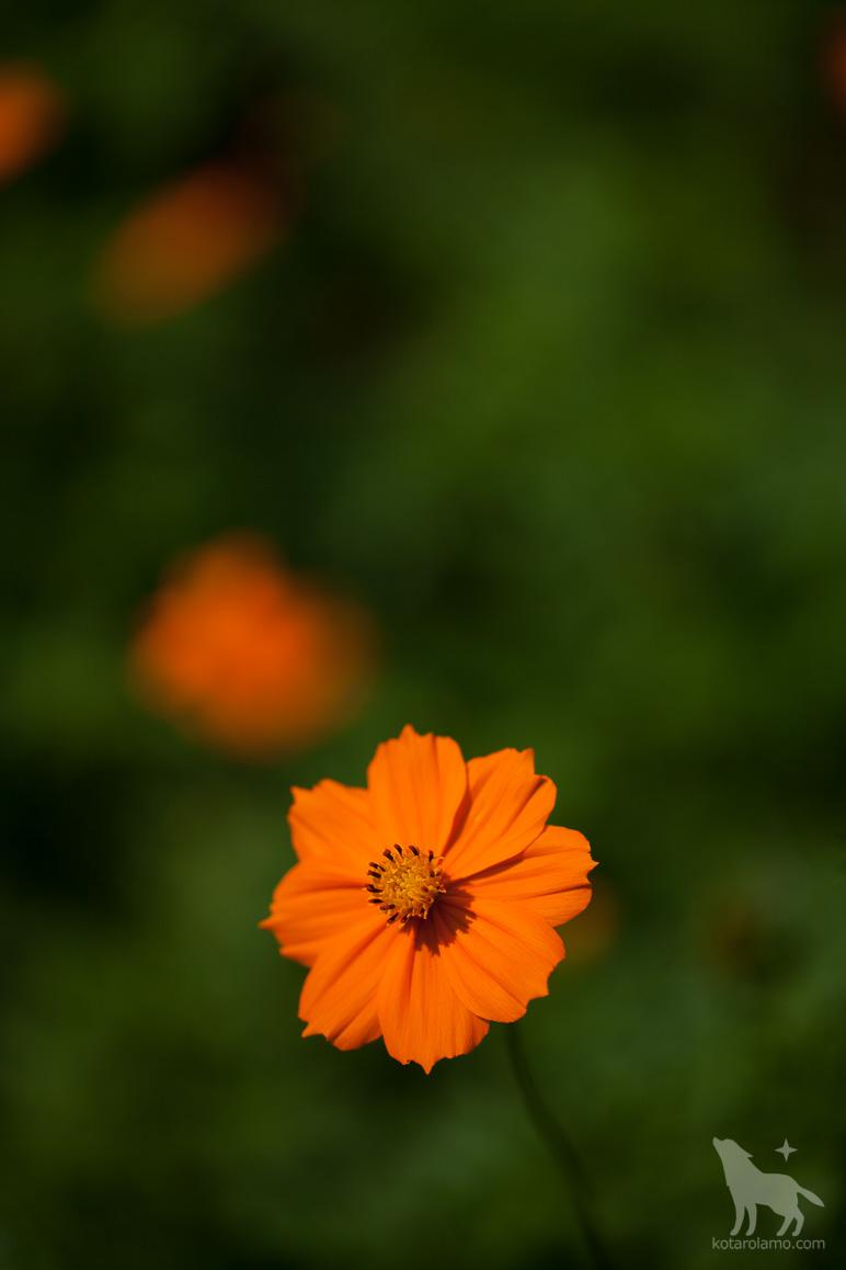 名前の分からない花、その1