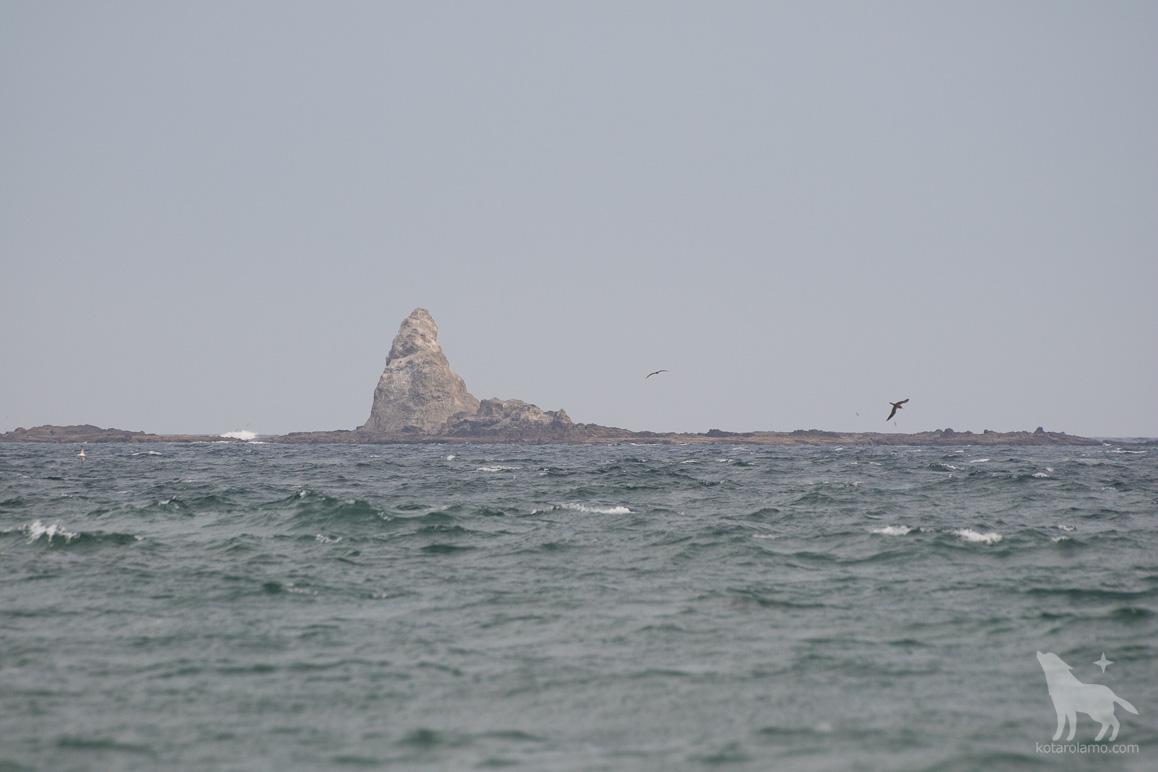 烏帽子岩と飛び回る鳥たち