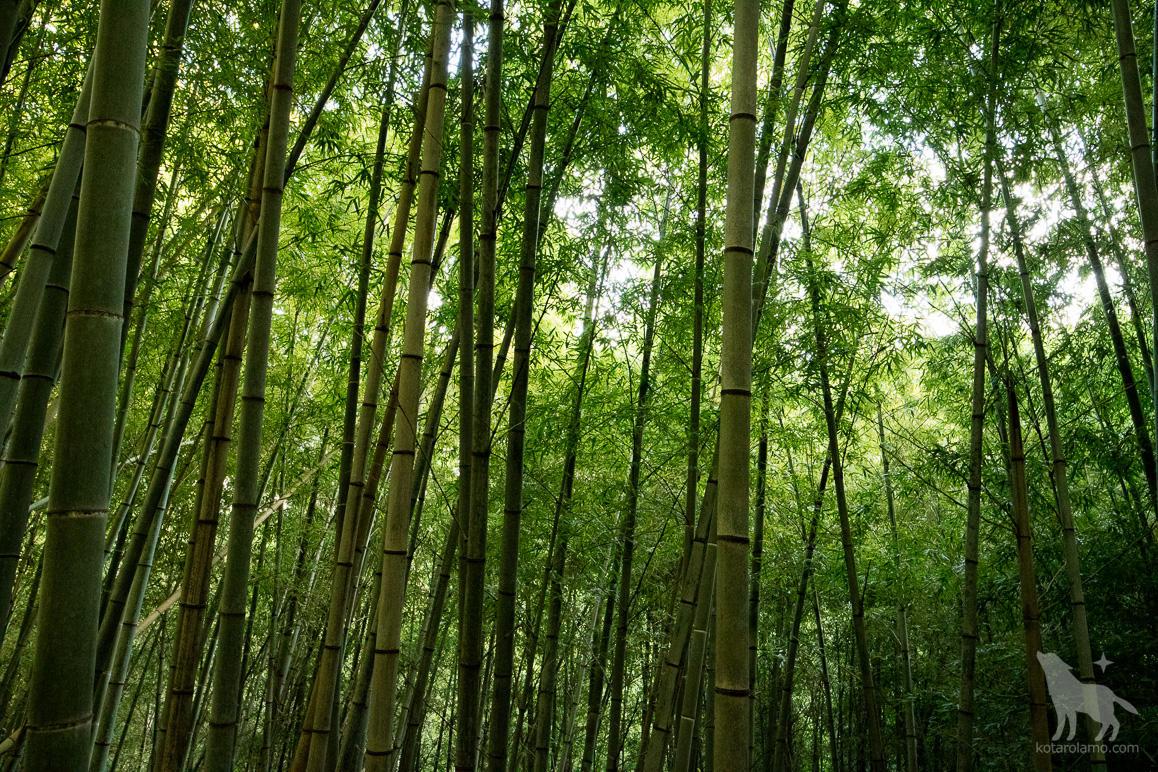 天園休憩所付近の竹林。 IMG_3688.jpg