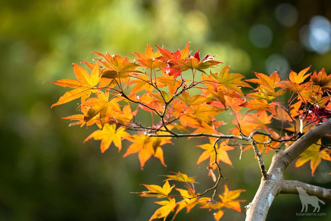 紅葉、小さな秋