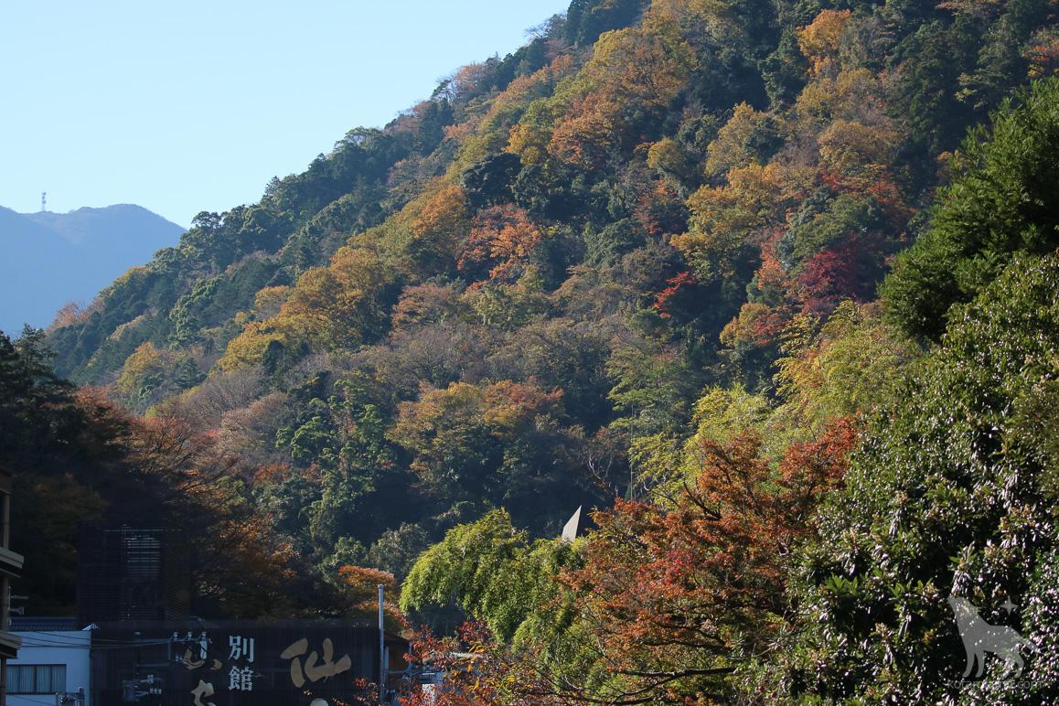 山一面に広がり始めた紅葉