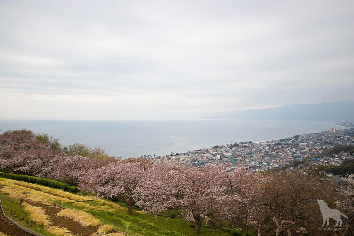 吾妻山公園の山頂から眺めた相模湾