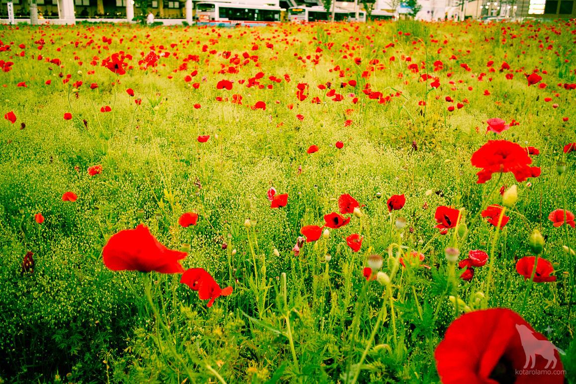 久里浜駅の駅前に咲く花