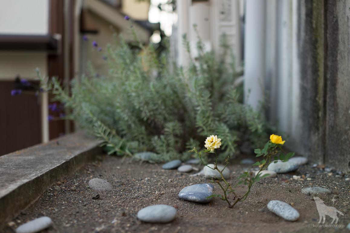 道端に咲く花 (1)