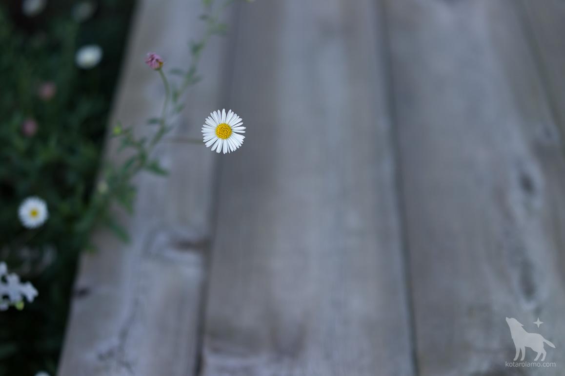 道端に咲く花 (3)