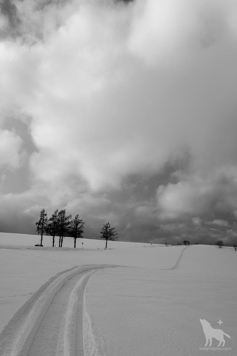 美瑛の丘、冬。